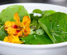 Fresh_wild_nasturtium_flowers_prepared_by_Chef_Jocelyn_MeyersAdams_for_the_Heritage_Day_foraging_menu_at_The_Table_Bay