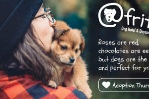 Adoption Thursdays