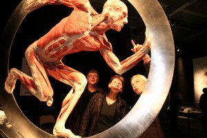 Body Worlds Vital 2. Credit- Body Worlds