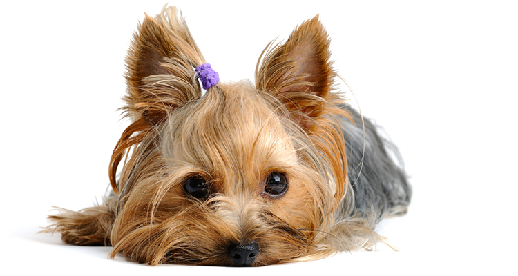 Less stress for pets