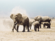 HELP AMARULA TO SAVE AFRICA'S ELEPHANTS