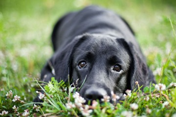 ITCHY DOG? STOP THE ALLERGY CYCLE THIS SUMMER