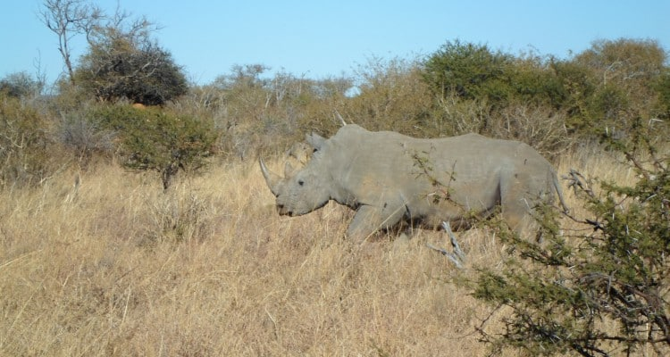 STOP RHINO POACHING WITH TOMTOM
