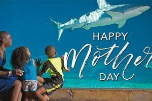 Make this Mother's Day special with uShaka!