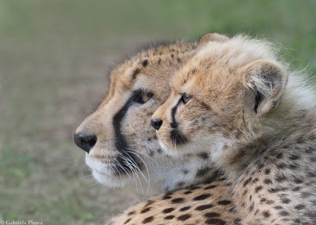 MAKE WORLD ENVIRONMENT MONTH LAST BEYOND JUNE WITH EMDONENI LODGE AND SPA WITH CHEETAH PROJECT