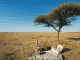 VISIT THE KALAHARI THIS WINTER