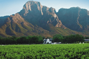 BOSCHENDAL ADDS MORE GOLDS TO A GLITTERING 2017 SEASON