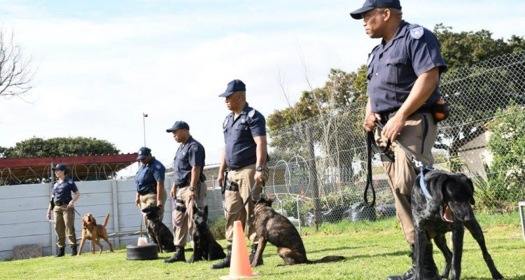 NEW K9 OFFICERS READY FOR 'PAW PATROLS'