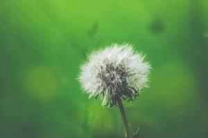 Hay Fever Allerguard