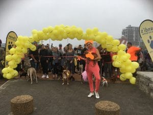 352 DOGGY PAWS WALKED THE SEA POINT PROMENADE