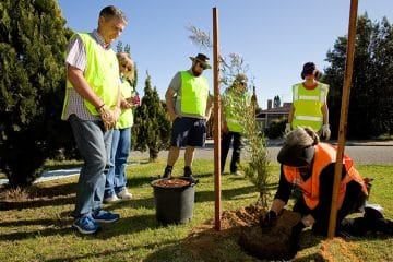 CITY REVITALISED BY TREE PLANTING PROJECT