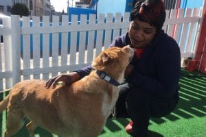 SIX STRAY DOGS GET A SECOND CHANCE AT LIFE THANKS TO FRITS DOG HOTEL