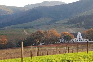 SA'S OLDEST WINE ESTATE CELEBRATES 334 YEARS OF UNINTERRUPTED WINE PRODUCTION