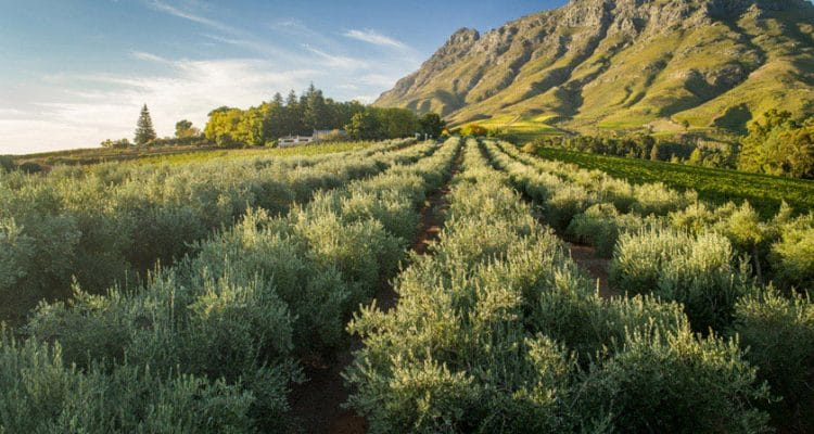 TOKARA RELEASES BEAUTIFULLY PRESENTED OLIVE OIL COLLECTION