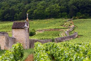 WORLD'S BEST WINES FROM PRIVATE SINGLE OWNER COLLECTION UNDER THE STRAUSS & CO HAMMER