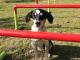 MYSCHOOL MYVILLAGE MYPLANET ANNOUNCES R100 000 DONATION TO BLOEMFONTEIN ANIMAL RESCUE CENTRE