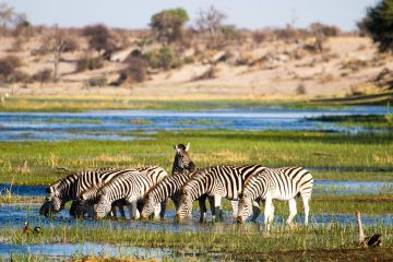 DISCOVER THE JEWELS OF NAMIBIA, BOTSWANA AND SOUTH AFRICA