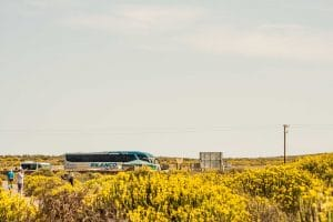 Experience a Namaqua Tours flower tour first-hand