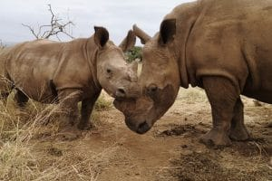 GOODERSON DUMAZULU PARTNERS UP WITH SA'S ZULULAND RHINO ORPHANAGE