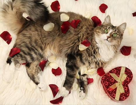 Top 7 Ways To Show Your Cats Love this Valentine's Day