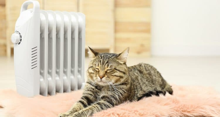 WHY OUR PETS MAY BE FEELING THE COLD MORE THAN WE THINK