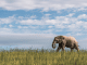 TAKE A VIRTUAL WALK WITH A HERD OF ELEPHANTS ON WORLD ELEPHANT DAY