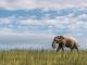 TAKE A VIRTUAL WALK WITH A HERD OF ELEPHANTS ON WORLD ELEPHANT DAY