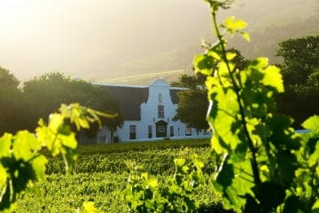 GROOT CONSTANTIA LAUNCH A MIXED CASE OF WINE TO CELEBRATE DRINK LOCAL WINE WEEK