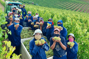 TOKARA HARVEST 2021 IS RIPE FOR THE PICKING