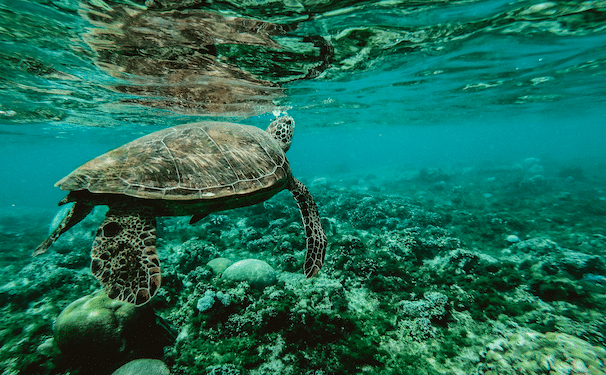 5 WAYS TO CELEBRATE WORLD OCEANS DAY