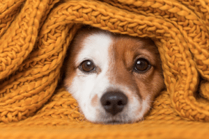 KEEPING YOUR PETS HAPPY AND HEALTHY DURING THE WINTER